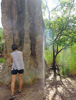litchfield-park-termiten-chi