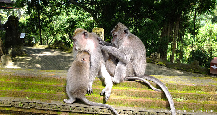 ubud-monkey-forest10
