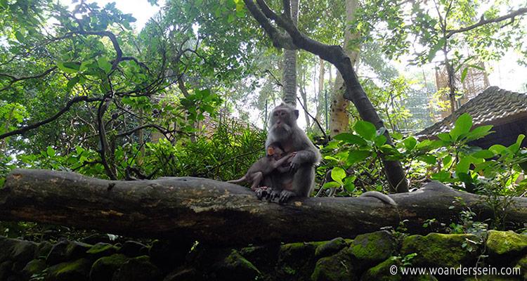 ubud-monkey-forest4