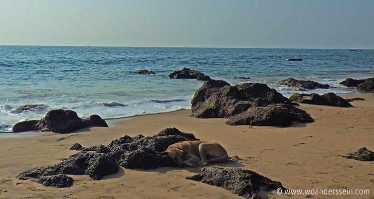 anjuna-beach-hund-am-strand