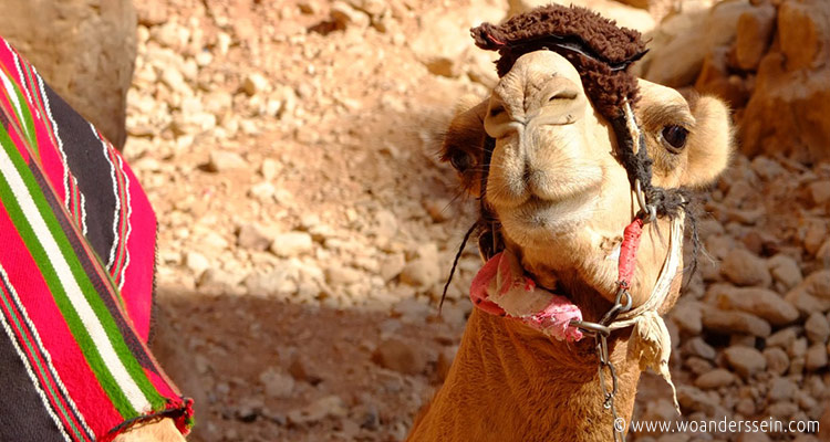 jordanien-petra-9