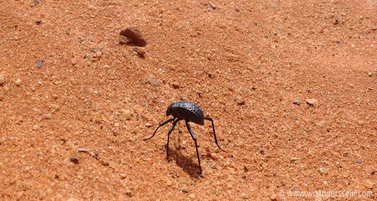 wadirum-bugs