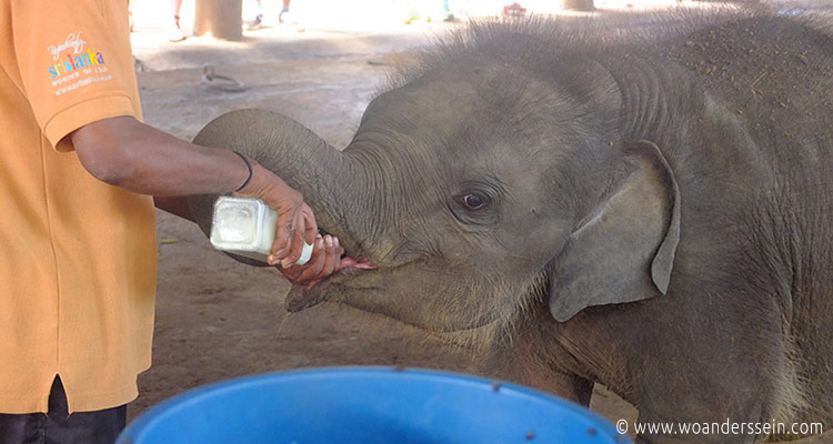 srilanka-pinnawala1-jpg