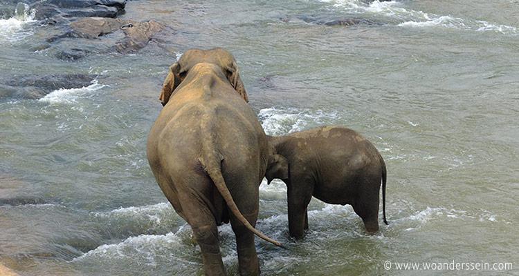srilanka-pinnawala11-jpg
