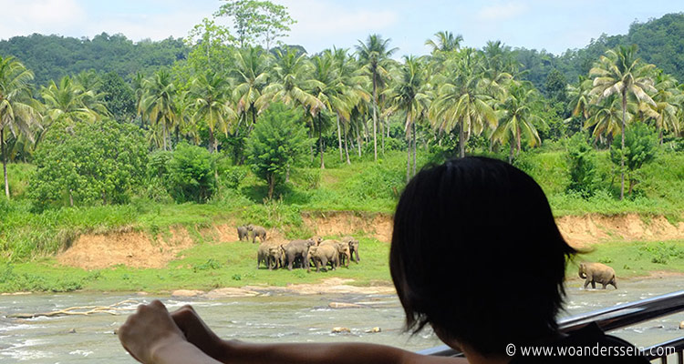 srilanka-pinnawala12-jpg