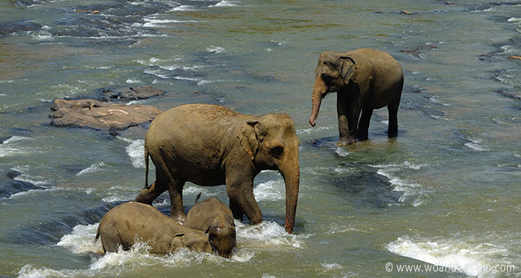 srilanka-pinnawala14-jpg