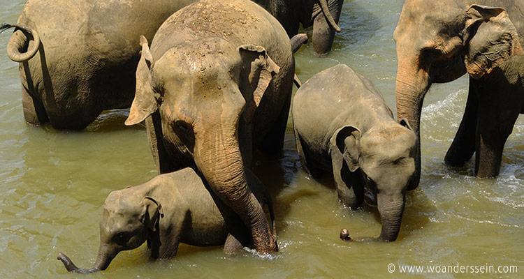 srilanka-pinnawala15-jpg