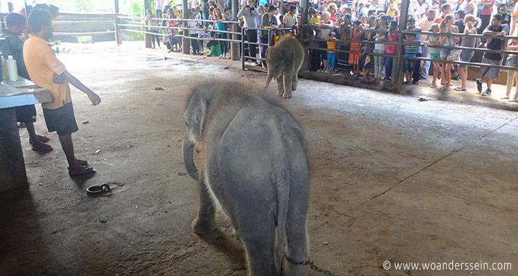 srilanka-pinnawala18-jpg