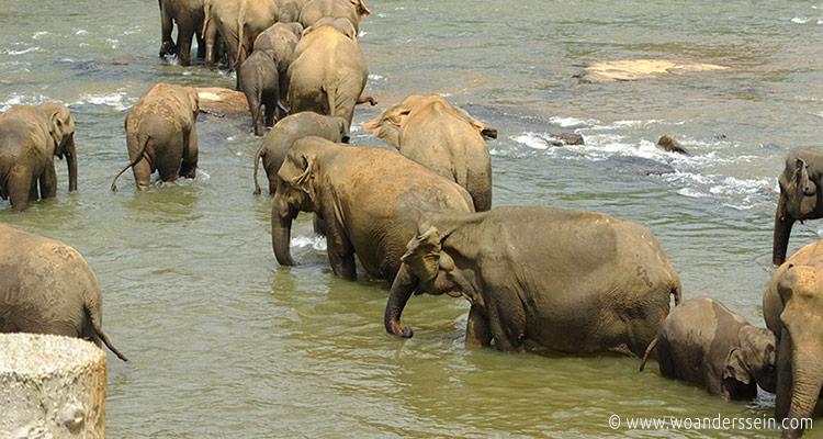 srilanka-pinnawala25-jpg