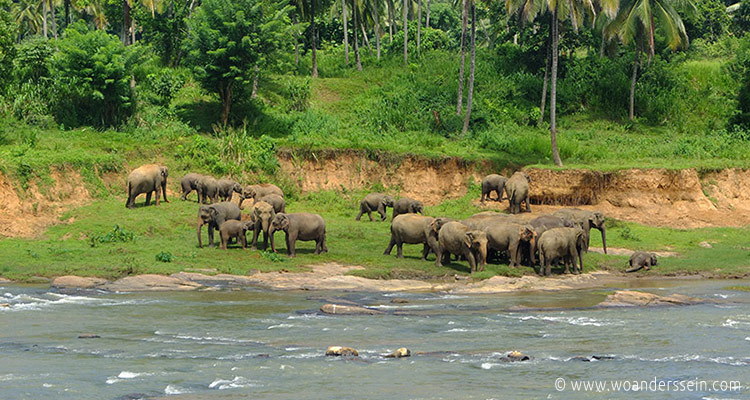 srilanka-pinnawala26-jpg