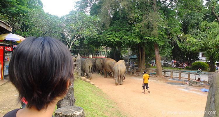 srilanka-pinnawala7-jpg