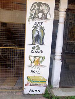 srilanka-pinnawala9-jpg