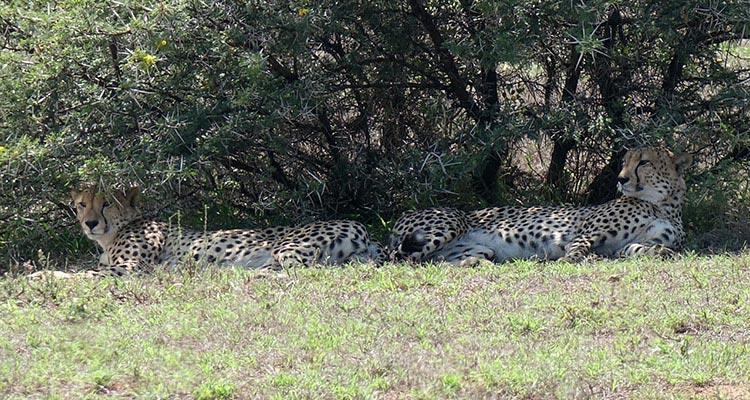 Reisetipps Addo Elefanten Nationalpark